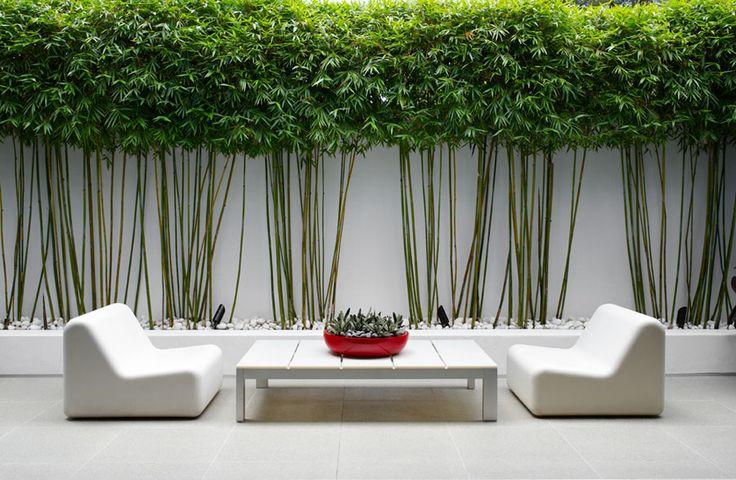 le bambou la touche deco au jardin