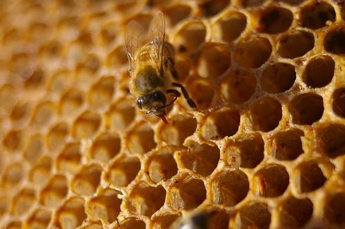 Miel / Honey