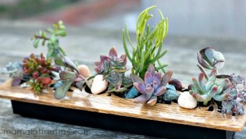 A Centerpiece of Succulents as easy as 1-2-3