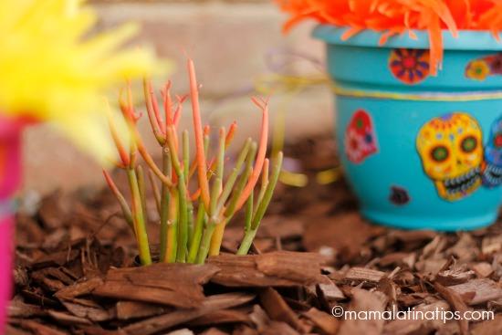 planta suculenta a un lado de una maceta con calaveras