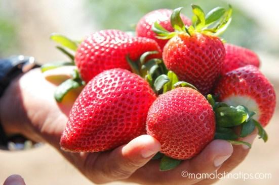 Strawberries on hand - mamalatinatips.com