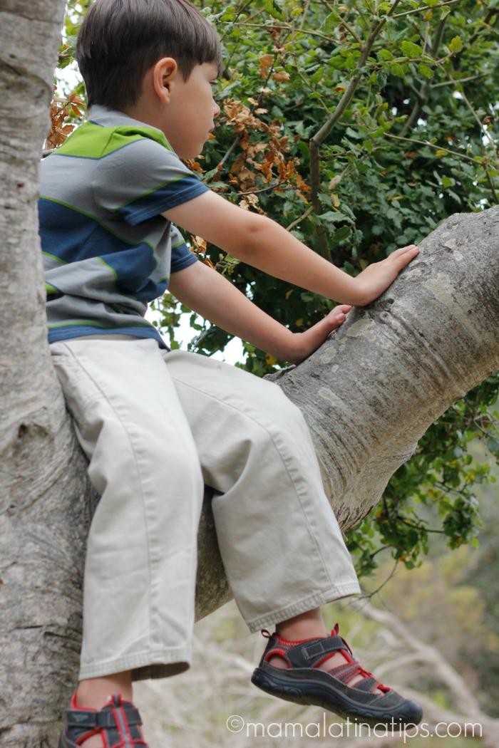 Kid sitting on an oak tree - mamalatinatips.com