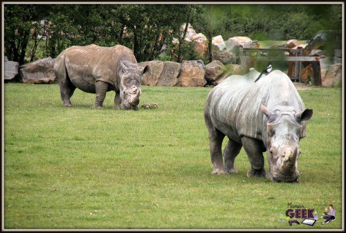 Planete-Sauvage-Safari-Rhinoceros