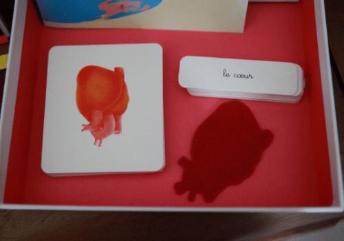 Coffret Montessori sur le corps humain