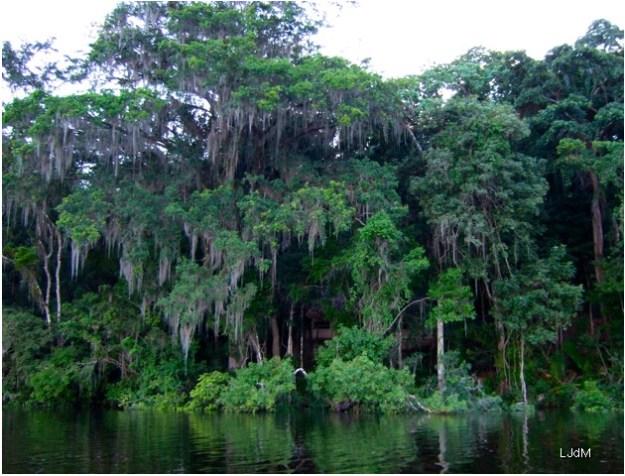 mangrove_guatemala