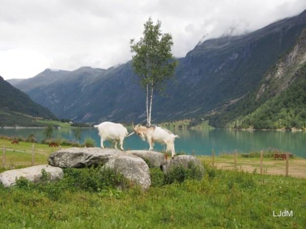 La Norvège de fjord en fjord