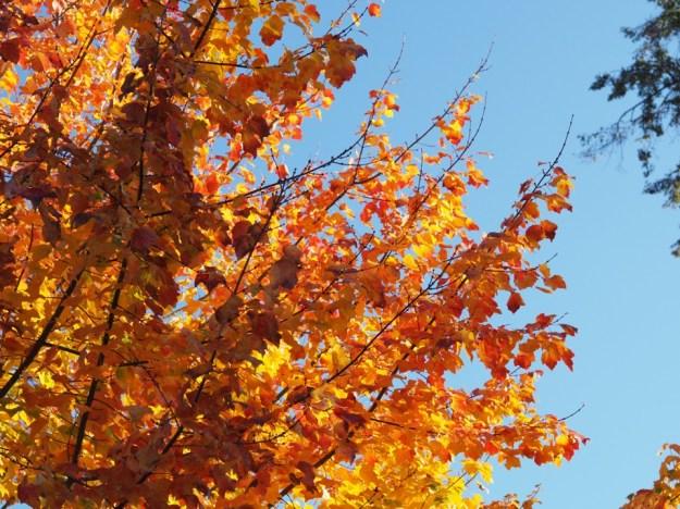automne à Lodnres