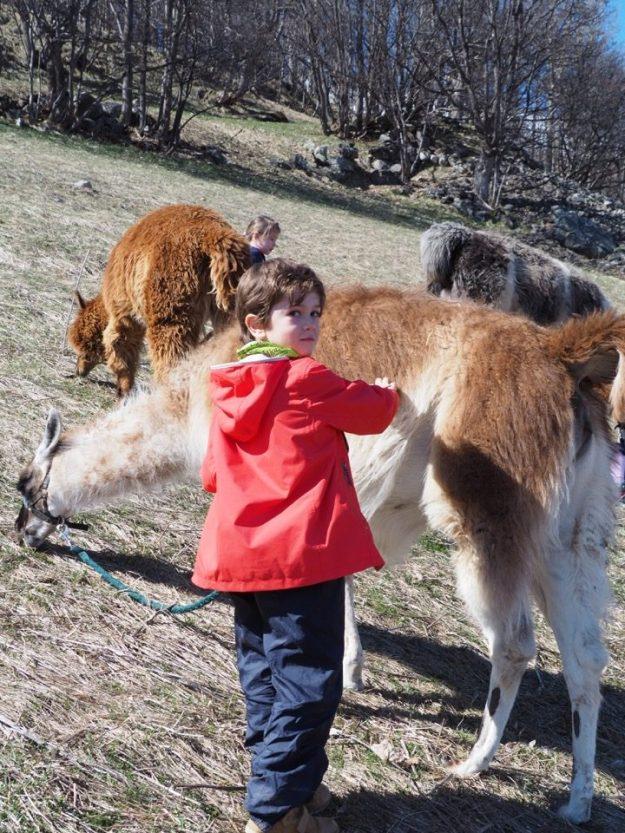 Randonnee avec lama