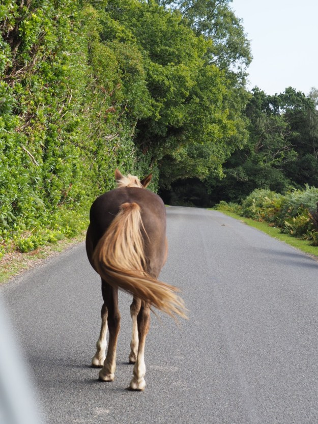 poney New Forest sur la route
