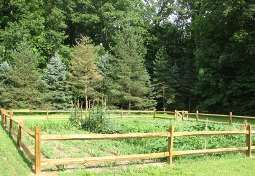 Vegetable garden fenced