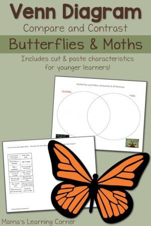 Moths and Butterflies Venn Diagram Worksheet  Mamas Learning Corner