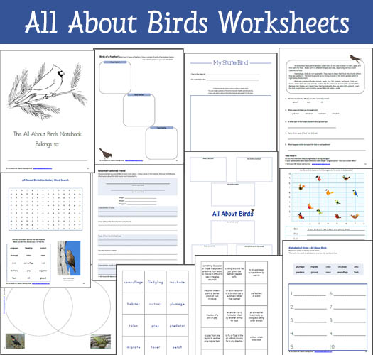 11 Exclusive Worksheets and Printables included in the All About Birds Resource Packet - Word Search, Venn Diagram, Fascinating Facts, My State Bird, Graphing Ordered Pairs, and more!