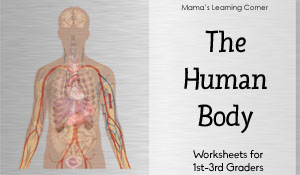 The Human Body Worksheet Packet
