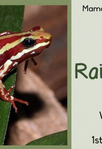 Rainforest Worksheets for 1st-3rd Graders