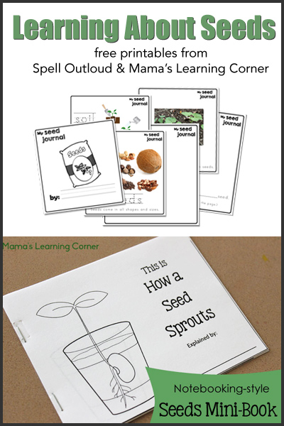 Learning About Seeds - from Spell Outloud and Mama's Learning Corner