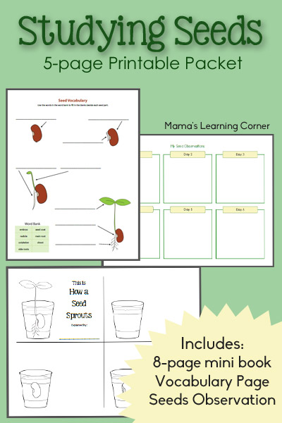Seeds Worksheet Packet - includes an 8-page mini-book, Seeds Observation journal, Vocabulary Page