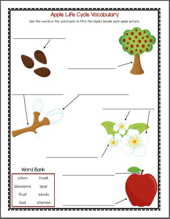 picture about Apple Life Cycle Printable named Apple Existence Cycle Printable Packet - Mamas Finding out Corner
