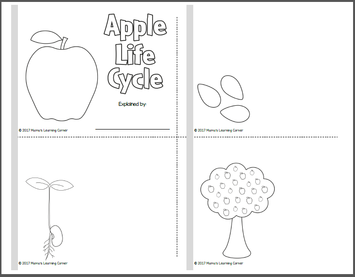 picture about Apple Life Cycle Printable identify Apple Everyday living Cycle Printable Packet - Mamas Mastering Corner