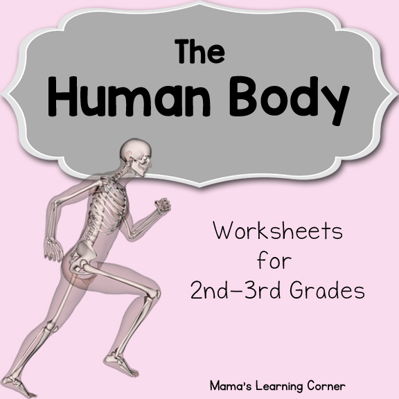 The Human Body Worksheet Packet for 1st-3rd Graders ...