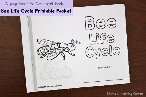 Bee Life Cycle Mini Book