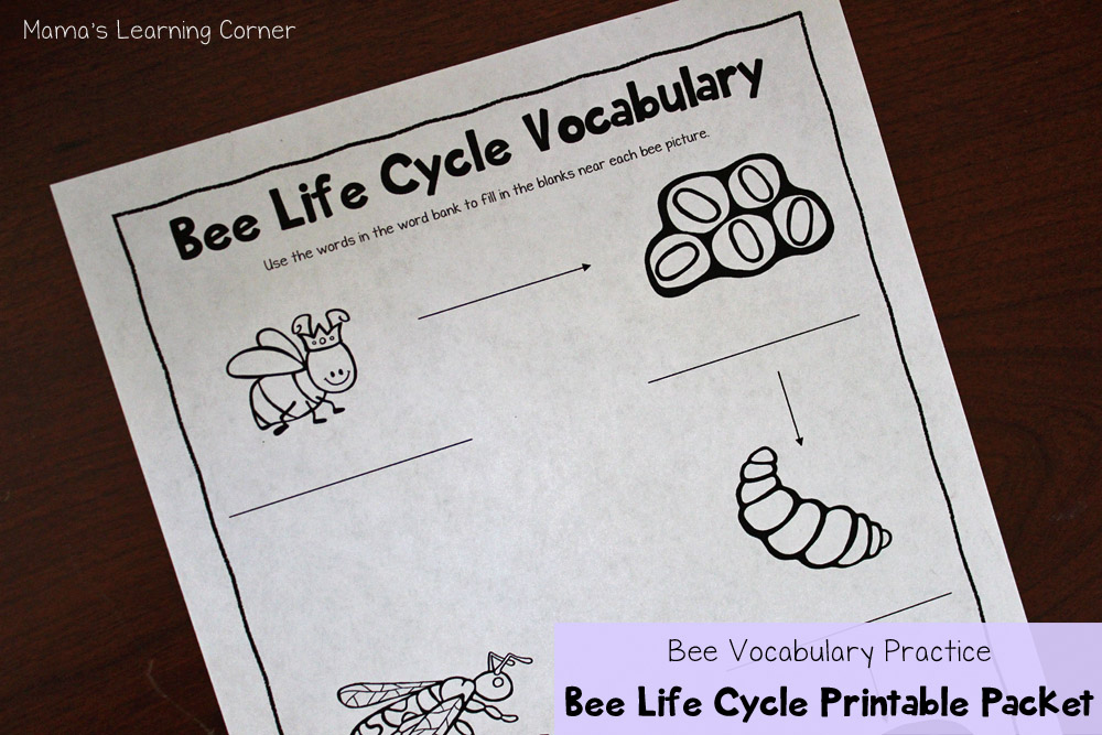Bee Life Cycle Vocabulary Worksheet
