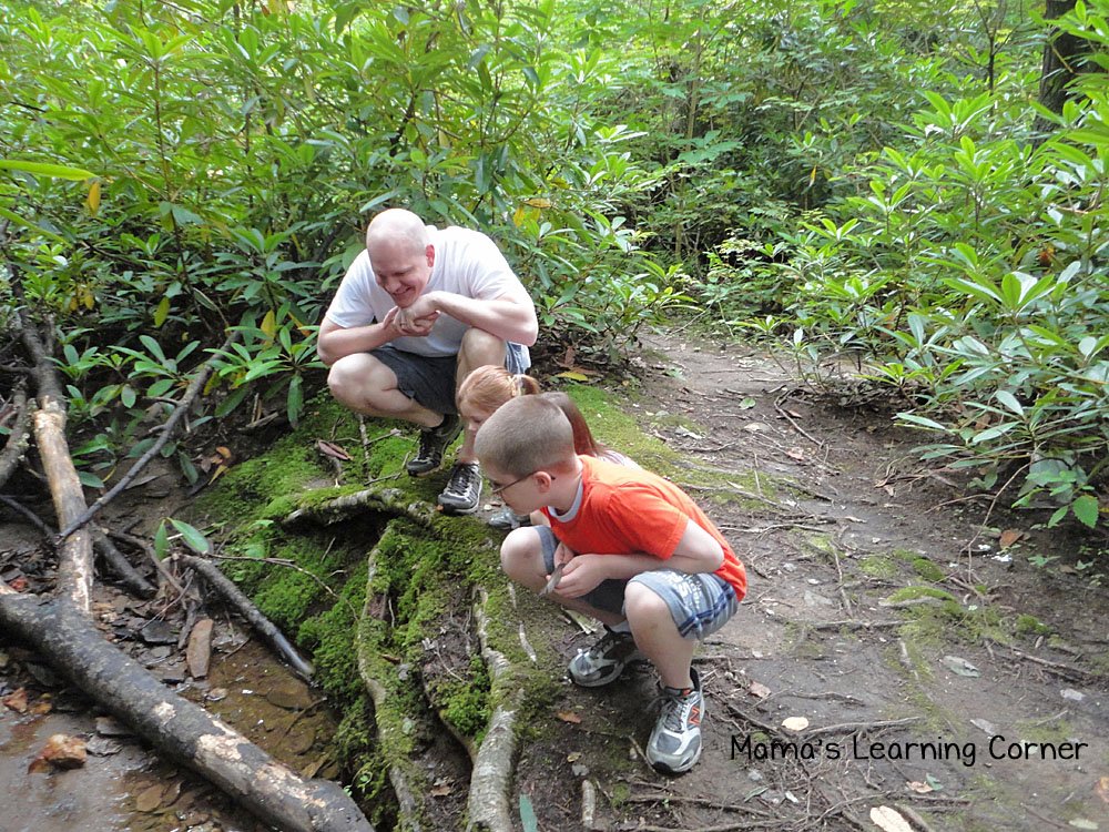 Science Activity: Hiking Trail