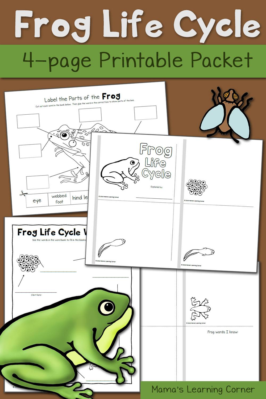 photograph regarding Frog Life Cycle Printable known as Frog Existence Cycle Worksheets - Mamas Mastering Corner
