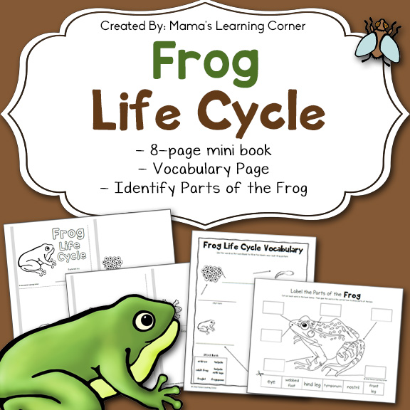 photograph regarding Frog Life Cycle Printable named Frog Lifestyle Cycle Worksheets