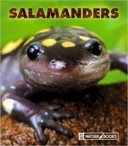 Salamanders by Maruska