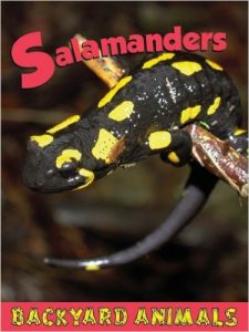 Salamanders by Nick Winnick