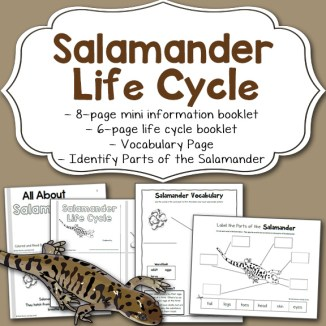 Salamander Life Cycle Worksheet Packet