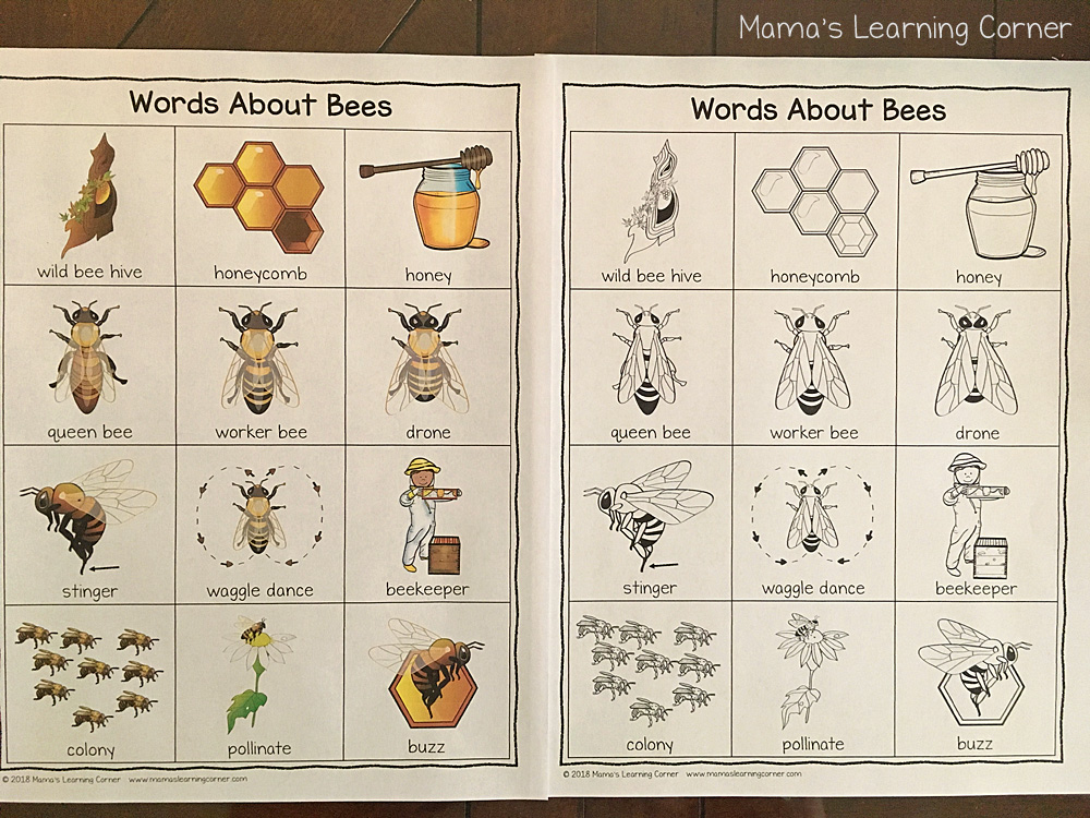Bee Writing Booklet Color Picture Dictionary