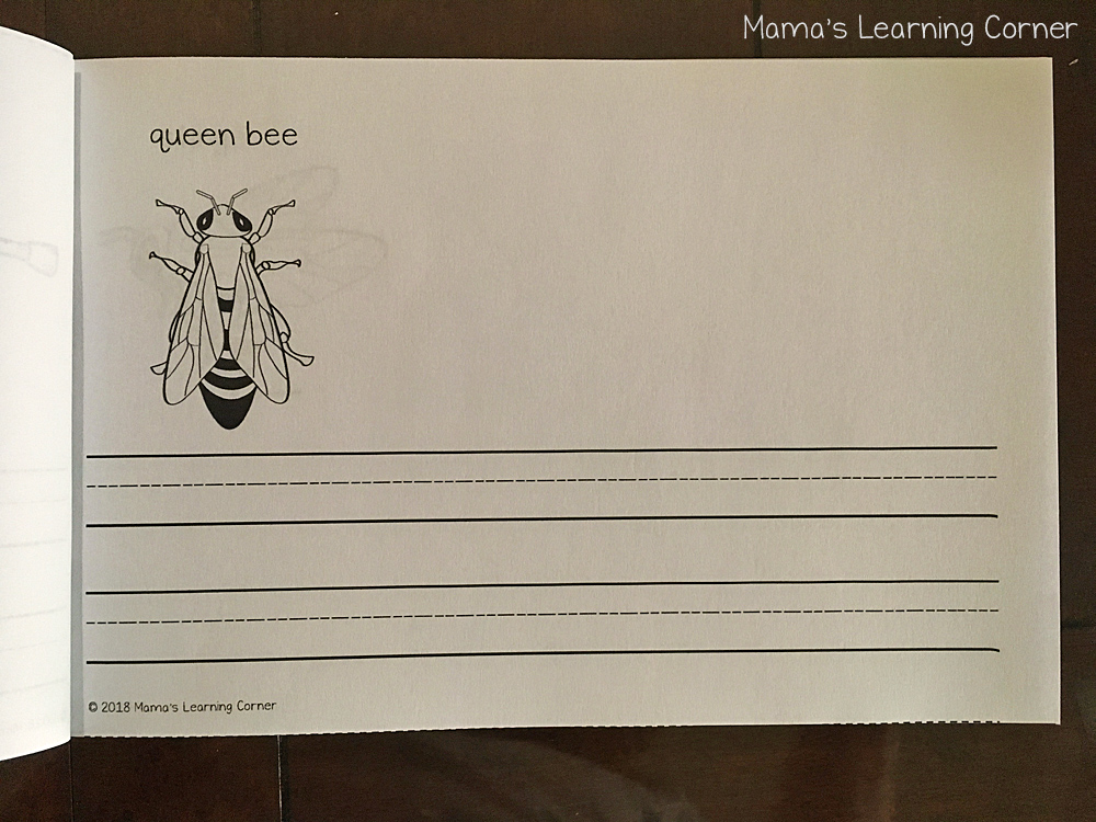 Bee Writing Booklet Queen Bee
