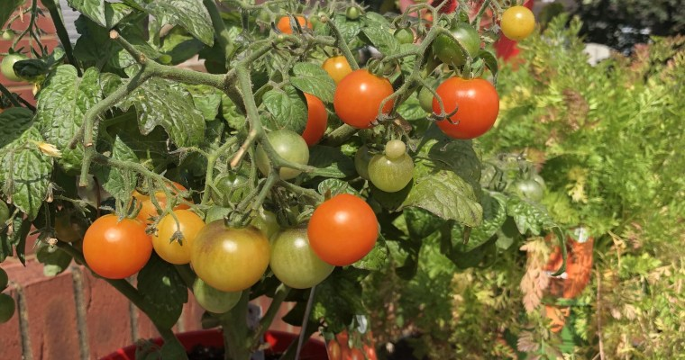 Gardening: Grow Your Own at Home!