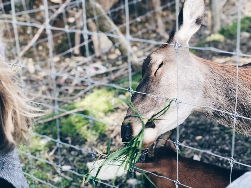 Highlights für Familien im Naturhotel Forsthofgut MamaWahnsinn