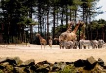 safari vakantie park