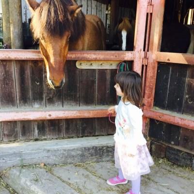 Pippi, Pferde, Pizza und Frust