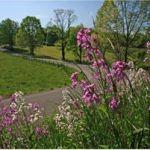 GRATIS: Calendario de Caminos con flores 2012