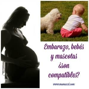 Embarazo, bebés y mascotas ¿son compatibles?