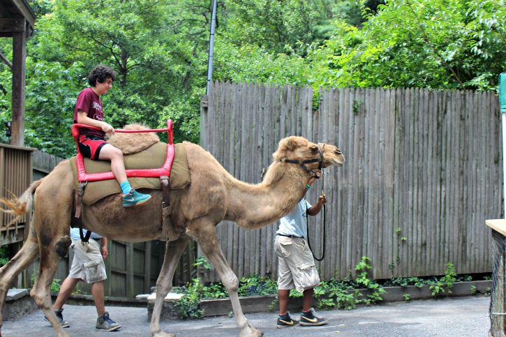 Zoológico de Filadelfia, Paseo en Camello