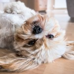 5 Tips to caring for your dog that sheds