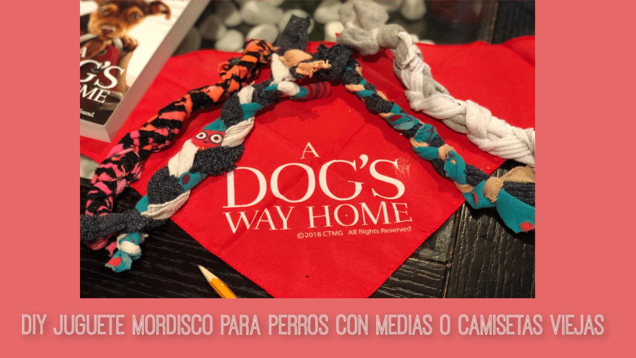 perro, mascota, diy, manualidad, craft, mordicos perro