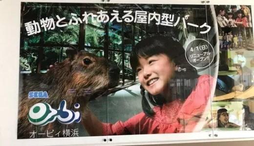 オービィ横浜で雨でも暑くても!動物とふれあえる|子どもと行ける関東の施設