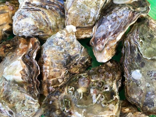 殻付き牡蠣は冷凍できるの?上手な保存方法と冷凍期間、美味しい解凍方法は?
