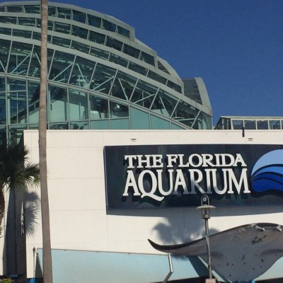 Enjoy a Family Fun Day at The Florida Aquarium