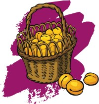 Basket of apricots