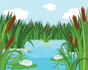 Tartan Crab Memorial Pond