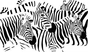 Zebras block stage