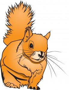 Sierpinski Squirrel