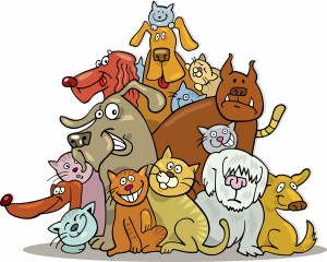 Hill of cats and dogs